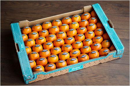 bienvenue sur le site internet lolitas sp cialiste des agrumes non trait es et jus d 39 orange. Black Bedroom Furniture Sets. Home Design Ideas