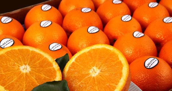 Lolitas nos oranges en culture raisonn e par l 39 entreprise perez tabarly - Machine a orange pressee ...